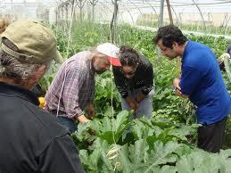 Du champ à l'assiette, en Grèce les initiatives se multiplient!